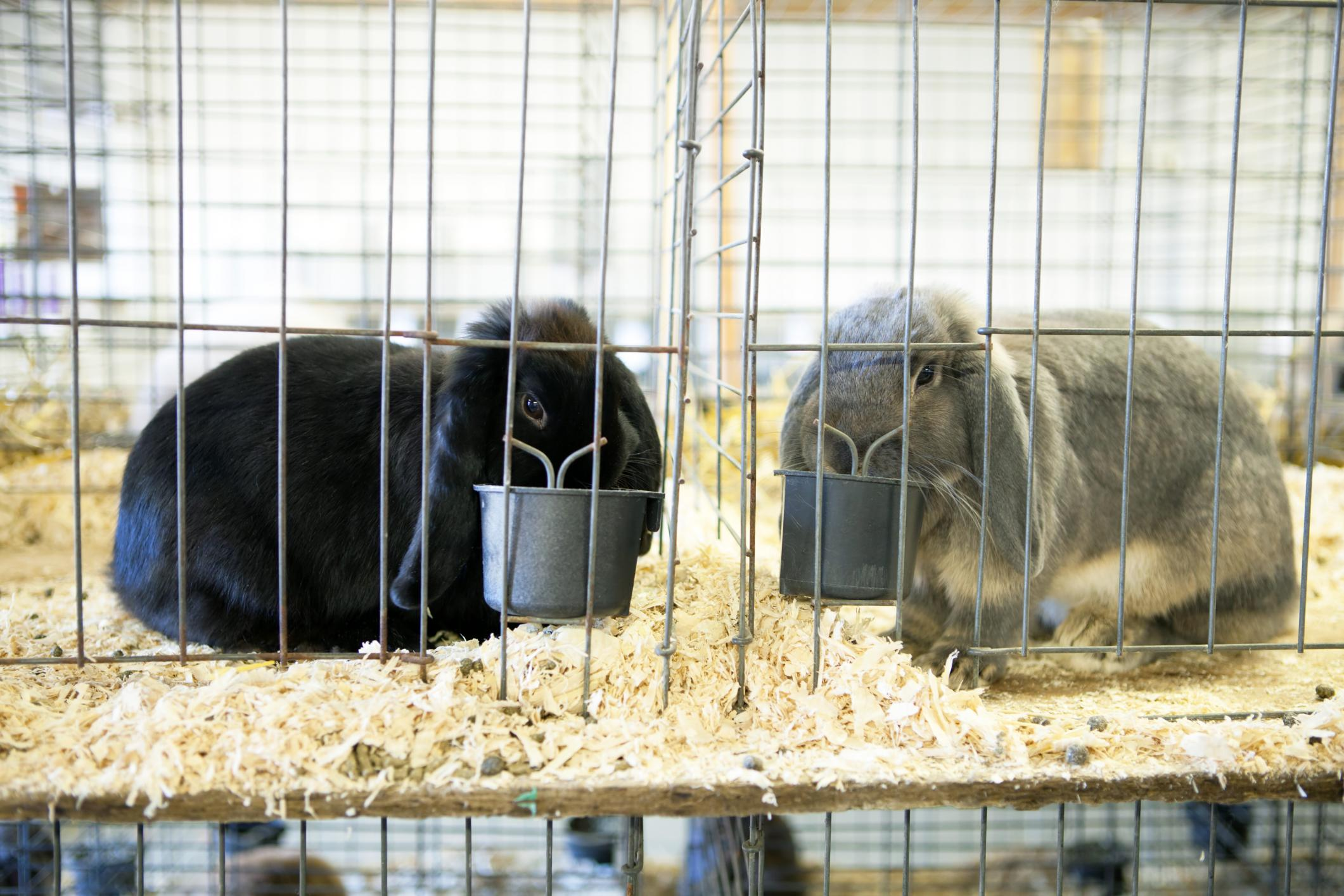 Providing Housing for Your Rabbits